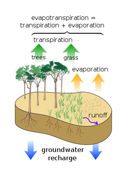 Evapotranspiration Diagram