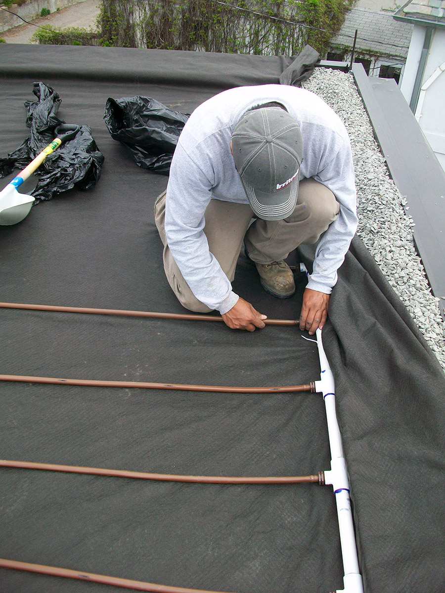 installing irrigation on a green roof